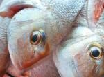Fish and mercury contamination